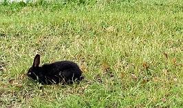 bunnies-thumb_edited_edited_edited.jpg