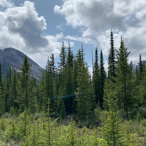 While the walk itself isn't terribly exciting as far as challenges are concerned, it's a lovely setting with the horizon hemmed in at all sides by mountains. It's also a great area to spot wildlife like mule deer.