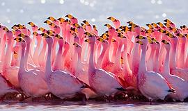 james flamingo.png