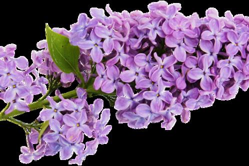 Huile aromatique Lilas