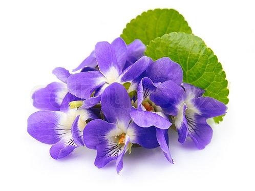 Huile aromatique Violette