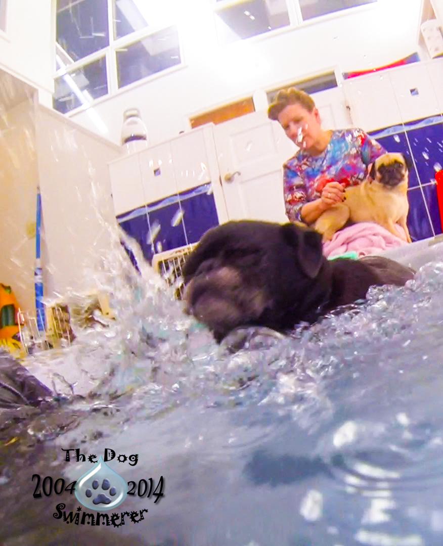 Fritz+splash+2.jpg