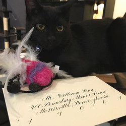 Classic Calligraphy with a Cat