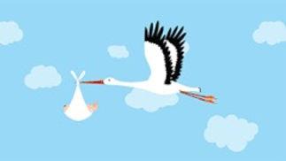 stork 1_edited.jpg