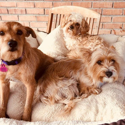 Paws Doggy Daycare and Kennels