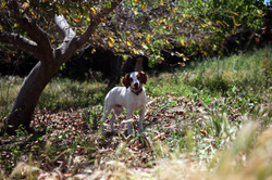 Bobby playing in the Orchard at PAWS