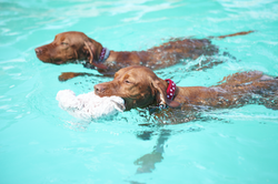 Doggy Daycare swimming races
