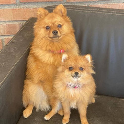 Malibu and Bambi love staying with us at Paws Kennels