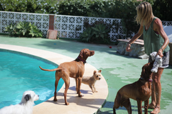 Doggy Daycare pool party