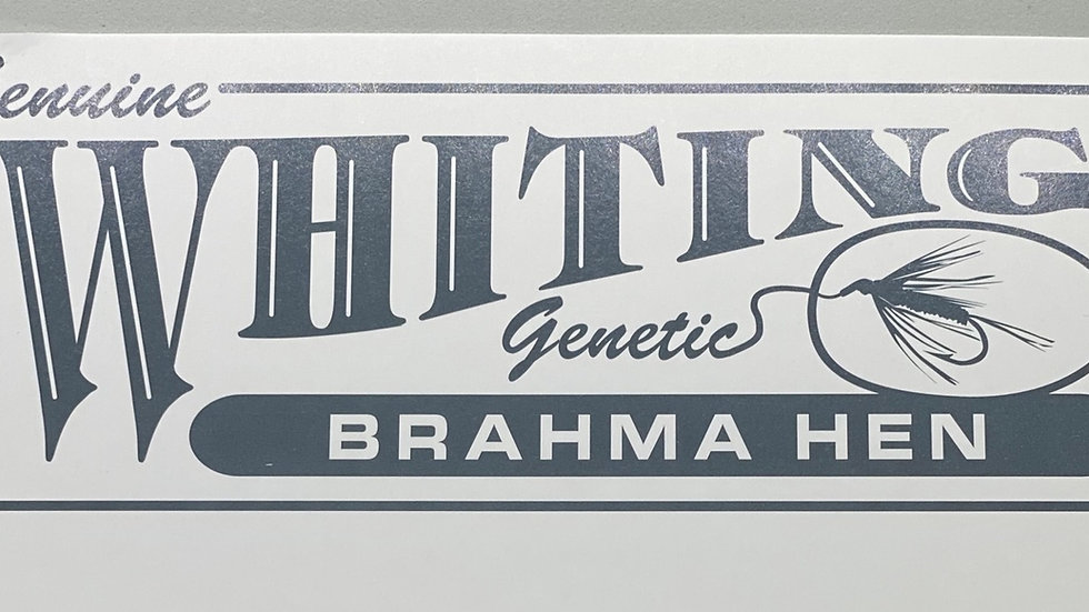 Whiting Brahma Hen Saddle