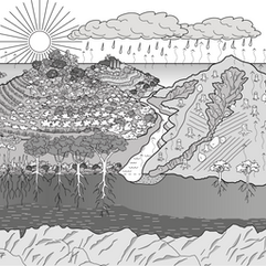 Water Cycle, Healthy  & Unhealthy.png