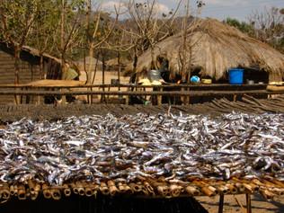 58_(P)_Fish Table.jpg