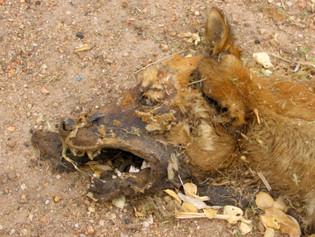 77_(A)_Dead Dog Detail.jpg