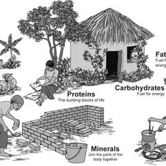 Nutrient Village