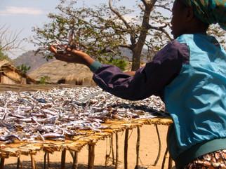 57_(A)_Woman Drying Fish.jpg