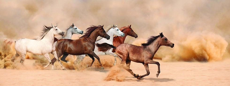 Pferde Herde web.jpg