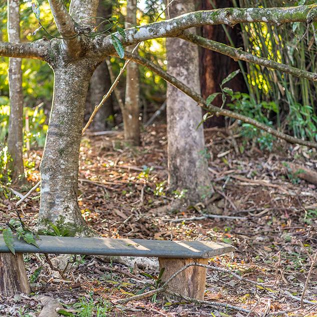 Rainforest Garden setting