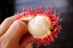 Rambutan in Vietnam