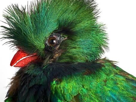 """""""L'Oiseau rare, de l'hirondelle au kakapo"""", une exposition sur la beauté fragile des oiseaux"""