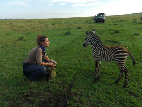 Bout de brousse : Parcs et réserves animalières du Sénégal