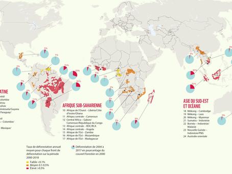 WWF : au moins 43 millions d'hectares de forêts tropicales et subtropicales détruites en 20 ans