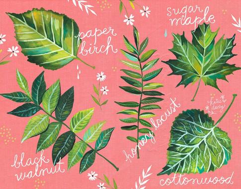 leafID.jpg