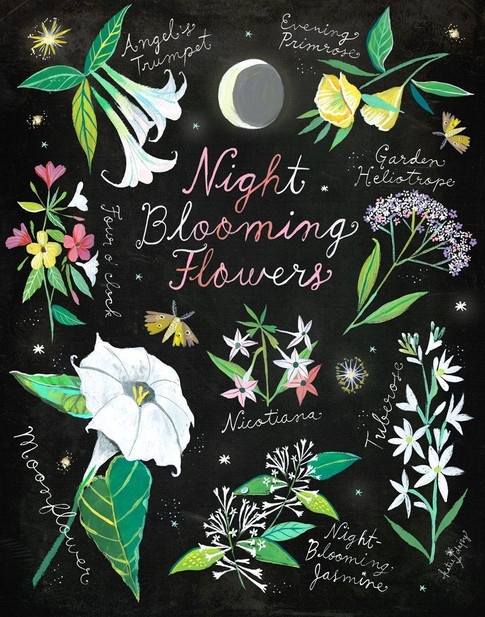nightblooming.jpg