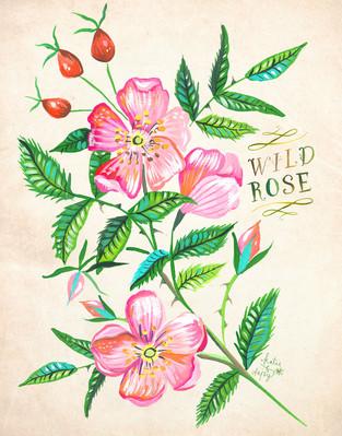 wildrose.jpg