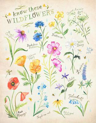 knowthesewildflowers.jpg