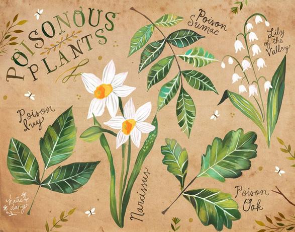 poisonousplants.jpg