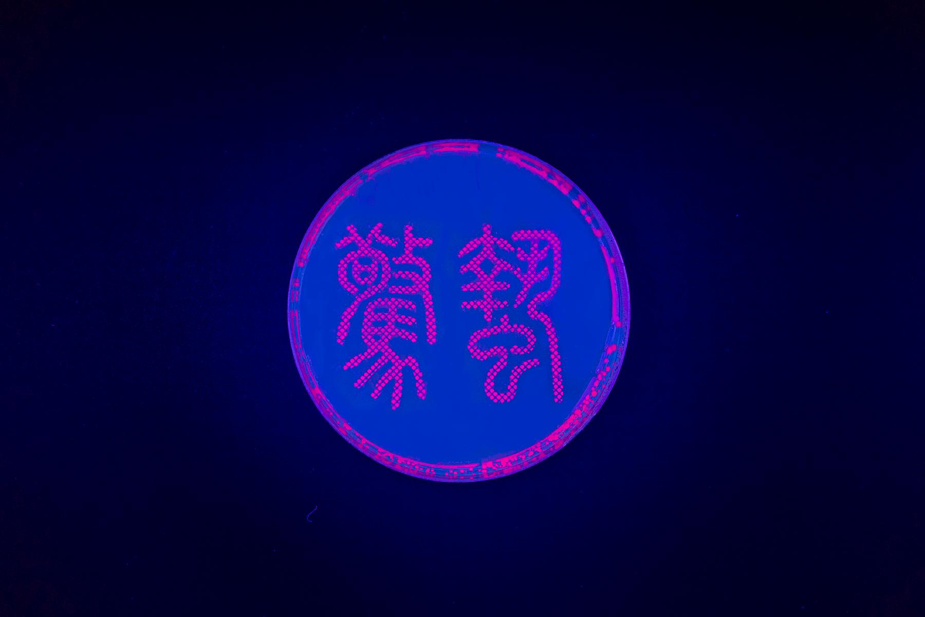 驚蟄 / Waking of Insects