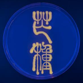 Fluorescent Protein Exploration