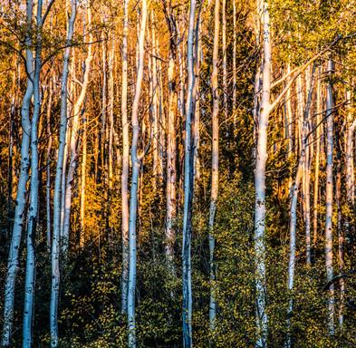 Aspen Glow Lightroom Edits-0166.jpg