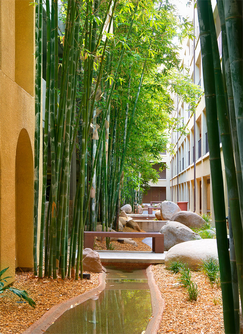 Bamboo Forest & Stream