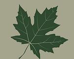 Original maple leaf.png