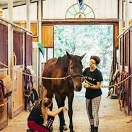 pulire gli zoccoli del cavallo