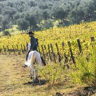 passeggiata a acavallo nelle vigne in autunno