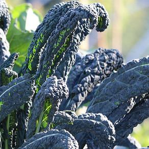 Pesto di Cavolo Nero