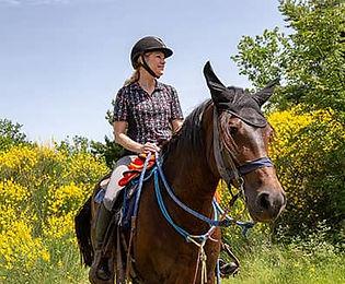 cavalli-click.jpg