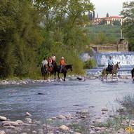 cavalli nel fiume