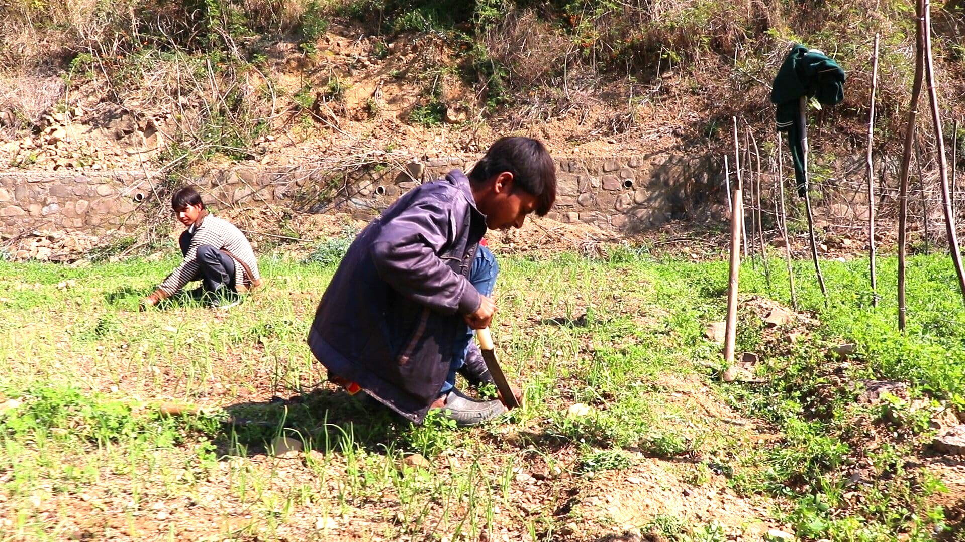 Organic Farming Himalayan Wellness Retre