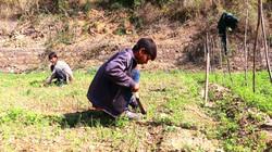 Organic Farming Himalayan Wellness Retre
