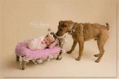 newborn baby and dog photoshoot