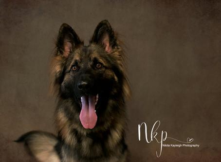 Fine Art Pet Portraits Colne, Lancashire