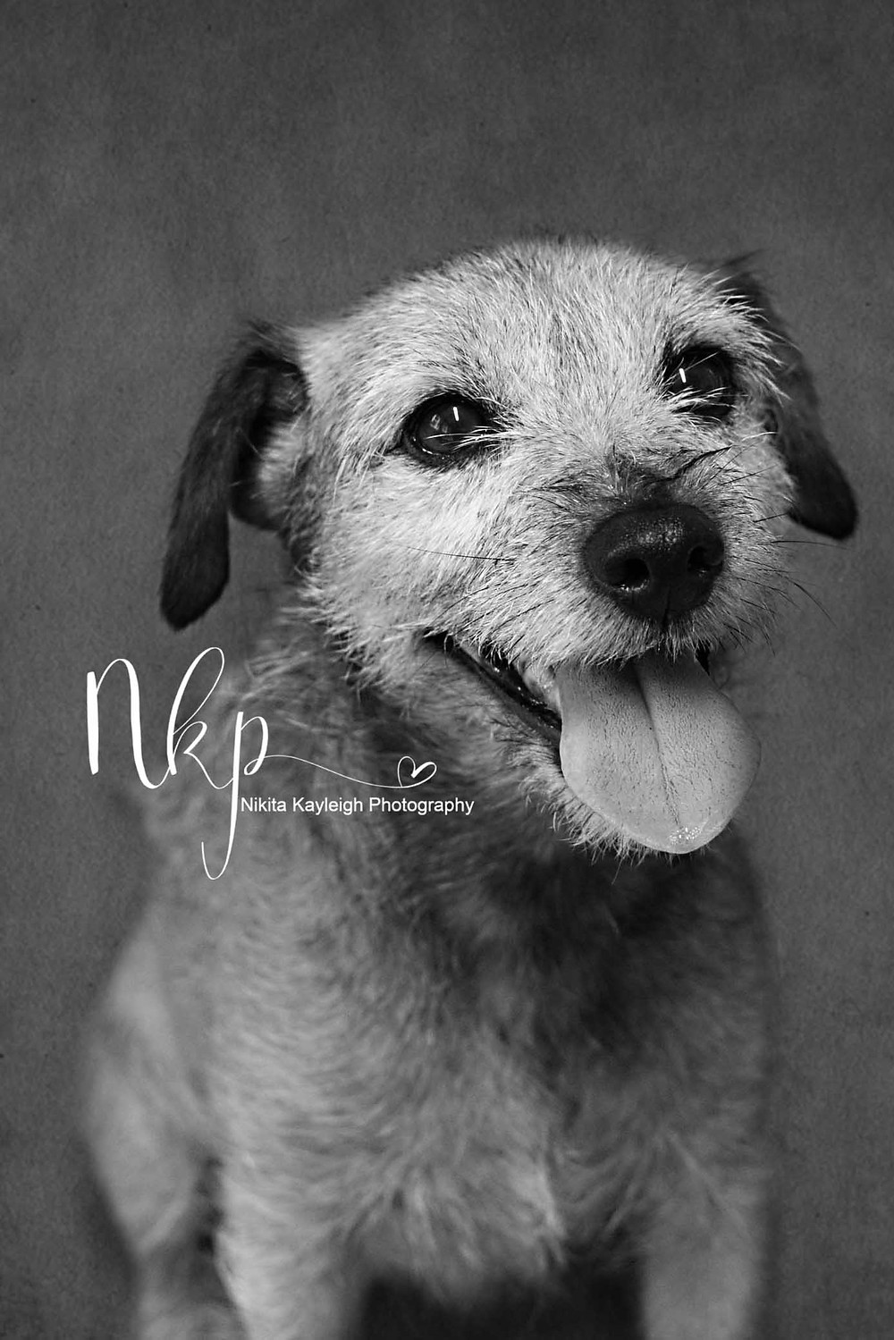 dog photographer lancashire