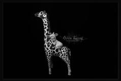 newborn baby photographer lancashire
