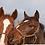 Thumbnail: The Six Horse