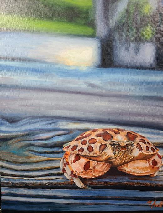 Leopard Crab
