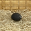 Thumbnail: Éponge Konjac noir