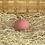 Thumbnail: Éponge Konjac rose